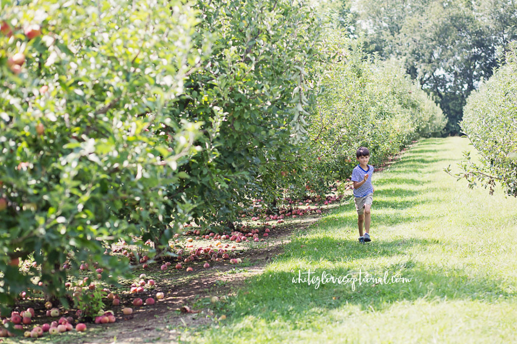 Eckert's Boyd Orchard - apple picking and pumpkin patch fun for Fort Knox families